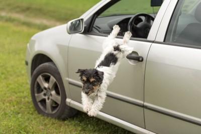 車から飛び降りる犬