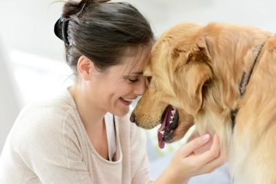 飼い主と額を合わせる犬