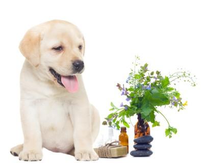 仔犬とアロマグッズ