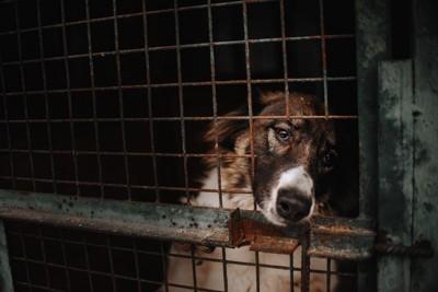 ケージの中の悲しげな顔の犬
