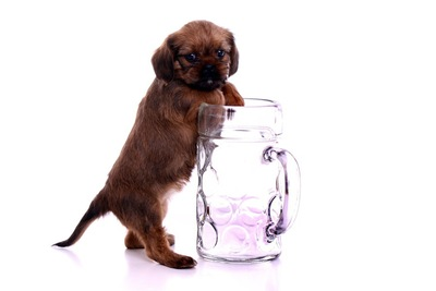 子犬と水の入ったコップ