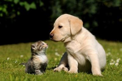 芝生の上にいる子犬と子猫