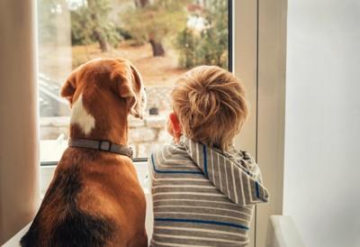 犬と外を眺める少年
