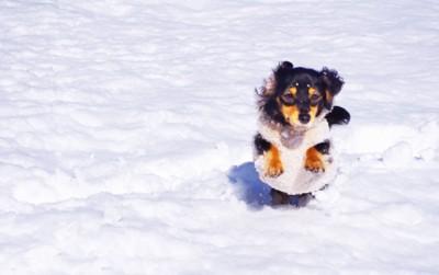 雪の中を走っている犬の写真