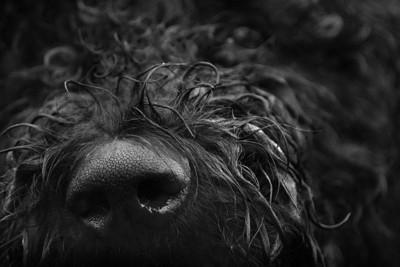 黒い犬の鼻