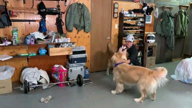 ボール咥える犬