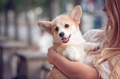 抱きかかえられるコーギーの子犬