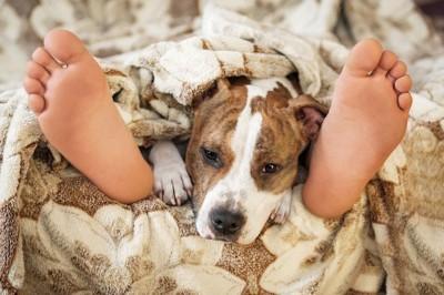 人の足の間で寝ている犬