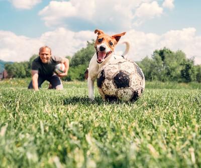 サッカーボールで遊ぶ犬と男性