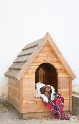 小屋で休んでる犬