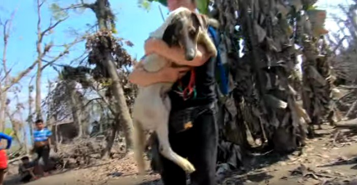 人に抱えられた犬