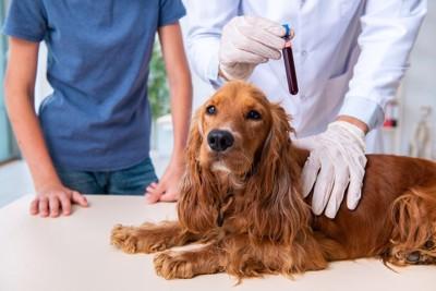 獣医師と血液採取を受けたコッカースパニエル