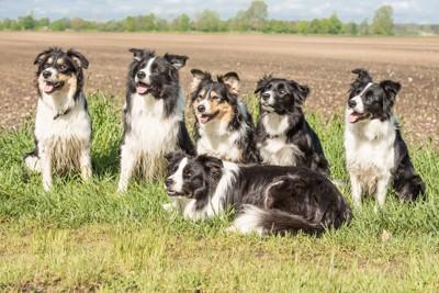 沢山の同犬種