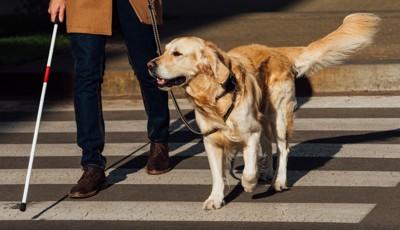 誘導する盲導犬