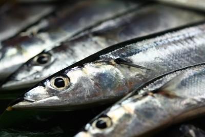 並んでおかれた生の秋刀魚