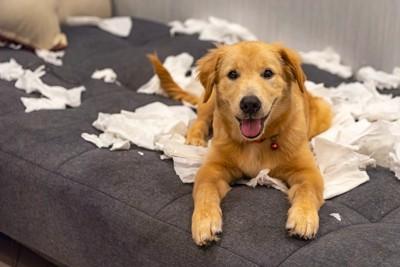 紙をいたずらしている犬