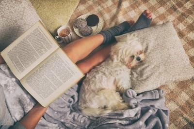 飼い主さんの足元で寝る犬