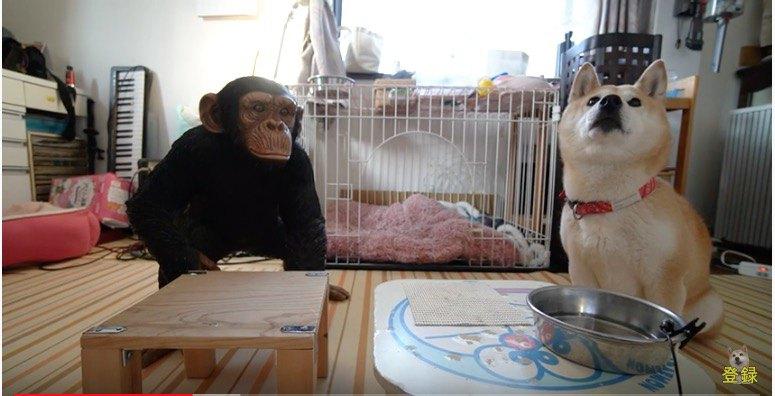 チンパンジーと並んでいます