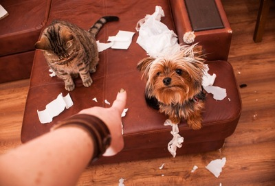 散らかして叱られている犬と猫