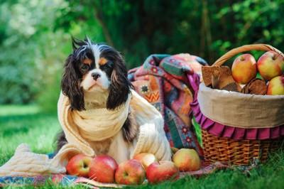 マフラーを巻く犬とりんご
