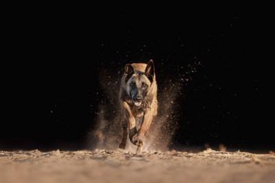 こちらに駆け寄ってくる犬