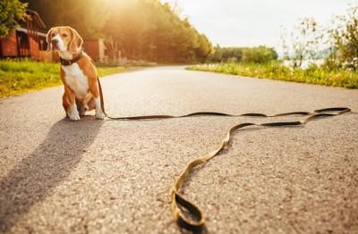 長いリードをつけた犬