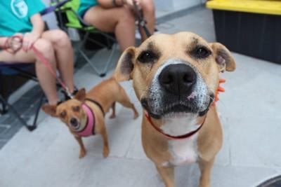 散歩中の茶色の中型犬と小型犬