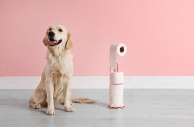 トイレットペーパーとお座りする犬
