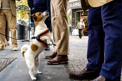 人を見上げる犬