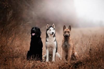 茂みに座る3頭のタイプの違う犬