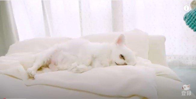 お昼寝中のかわいいコハクちゃん
