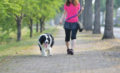 愛犬と散歩する女性