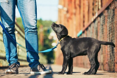 お散歩中に立ち止まる犬