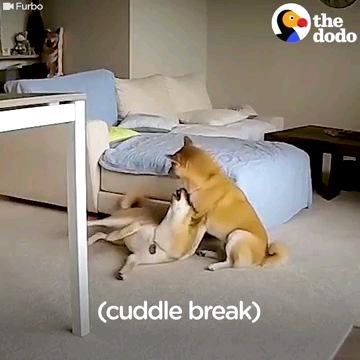 座る犬と寝ころぶ犬