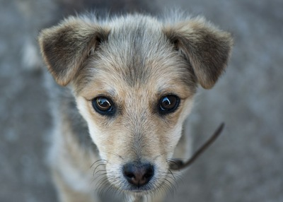 少し寂しそうな表情の犬