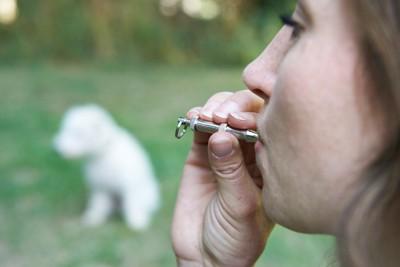 白い犬の前でホイッスルを吹く女性