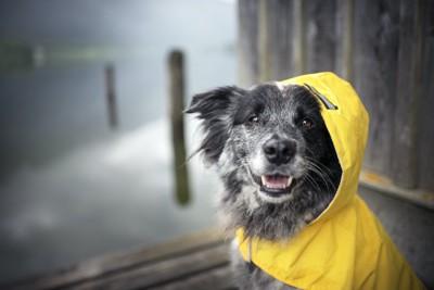 黄色いレインコートを着た犬