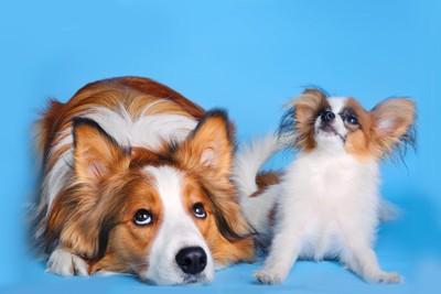 横に並んでいる大きな犬と小さな犬