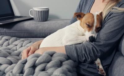 女性に抱っこされて眠っているジャックラッセルテリア