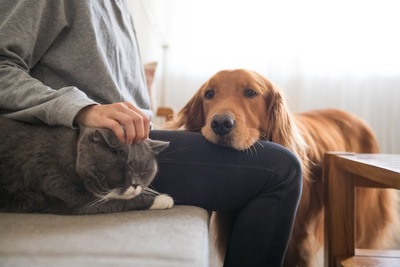 ソファーに座る飼い主に甘える犬と猫