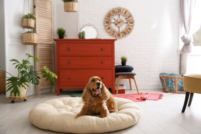 白くて丸いクッションでくつろぐ犬