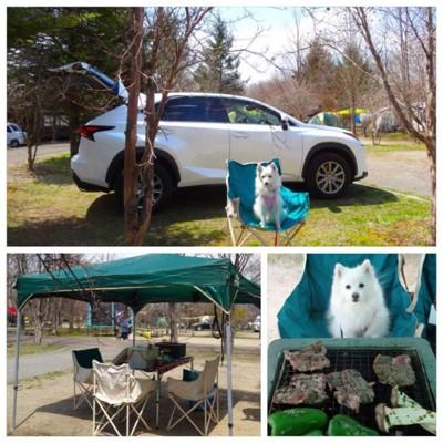 キャンプサイトと焼肉と犬