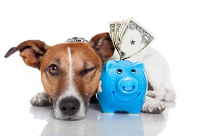 貯金をしている犬