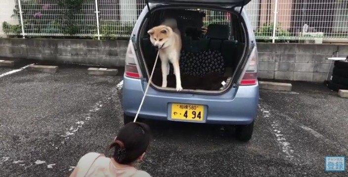 嫌がるらんぷちゃん