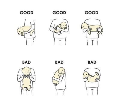 犬の抱き方の良い例と悪い例のイラスト