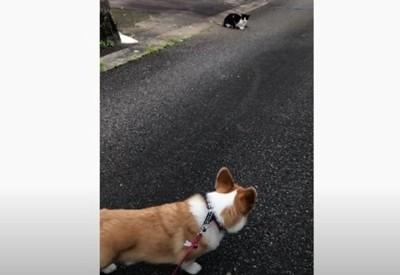 猫を見るわんこ