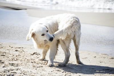 自分の尻尾を齧っている犬