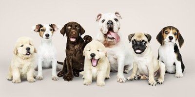 横に整列する7匹の犬