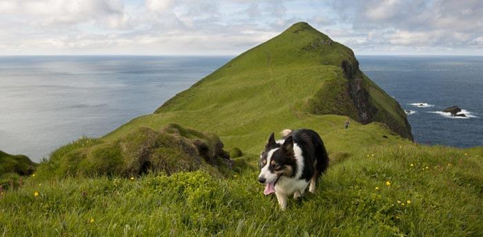 無人島にいる犬