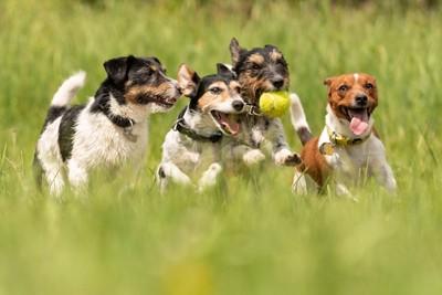 4匹のボールをもつ犬